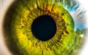 Iris oeil